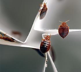 They Crawl, They Bite, They Baffle Scientists