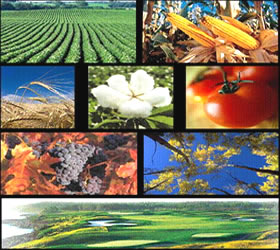 study-in-progress-to-overcome-flaws-fruit-blemishes-impeding-kinnow-exports
