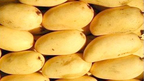 Pakistan likely to surpass Mango export targets