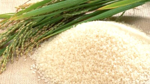 Rice exports crosses 2.734 million tons mark: REAP