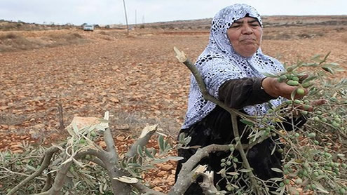 Settler clashes with Palestinians reach boiling point