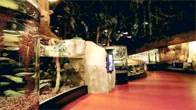 Night safaris begin today at Dubai Aquarium