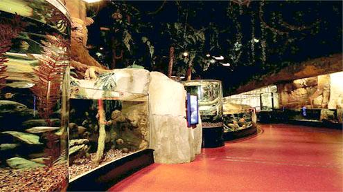 Aquarium and Underwater Zoo