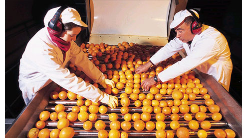 Orange juice prices hit record