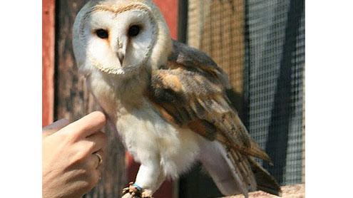 owls arrives at Karachi Zoo