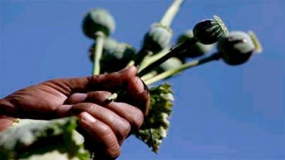 Myanmar declares war on opium