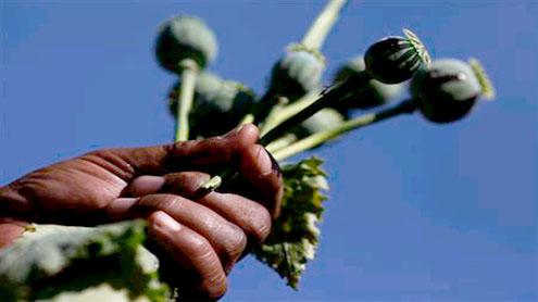 war on opium