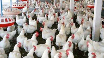 Poultry sector faces Rs10 billion loss in four months