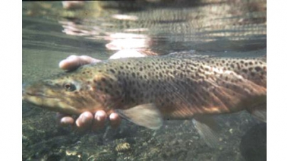 Pakistan receives 50,000 metric ton Trout fish order from Gulf