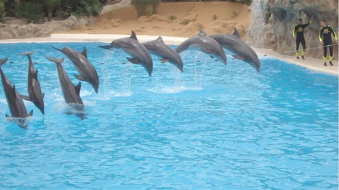 Country's biggest pool for dolphins show