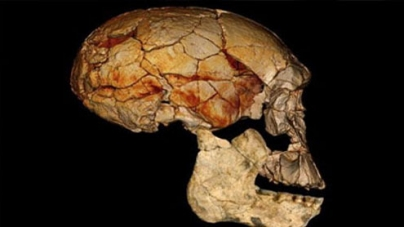 Early Man was not alone: study