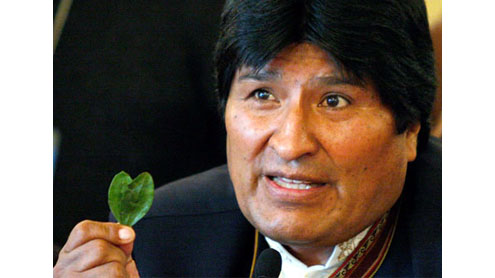 Bolivia sees fall in coca production, says UN report