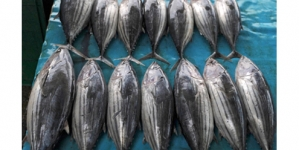 Plan to promote inland fish farming