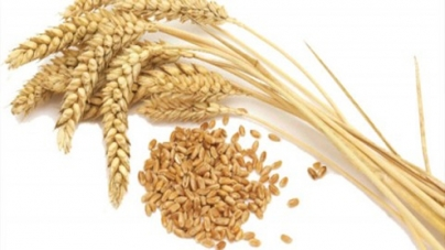 Major crops yield witnesses tremendous increase during last five years