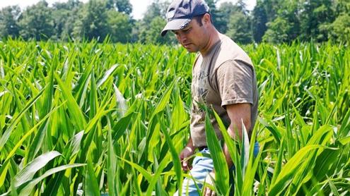 House GOP revives farm bill by splitting it in 2