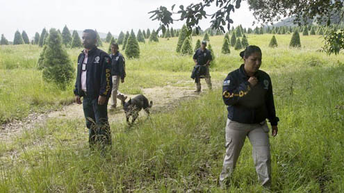 Mass grave found near Mexico City