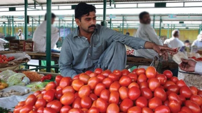 Tomato becomes an Expensive Vegetable