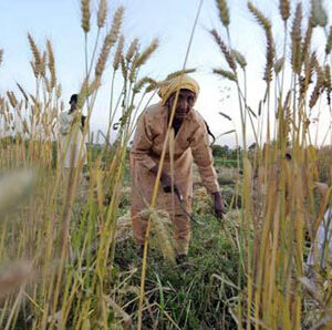 SBP Amends Rules to Boost Agri Financing