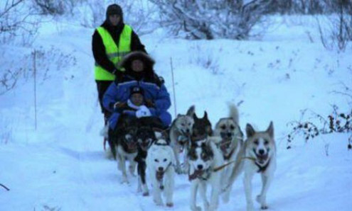 World's 1st dog-sled taxi service launched in Norway