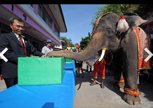 Circus Elephent Fight for Freedom