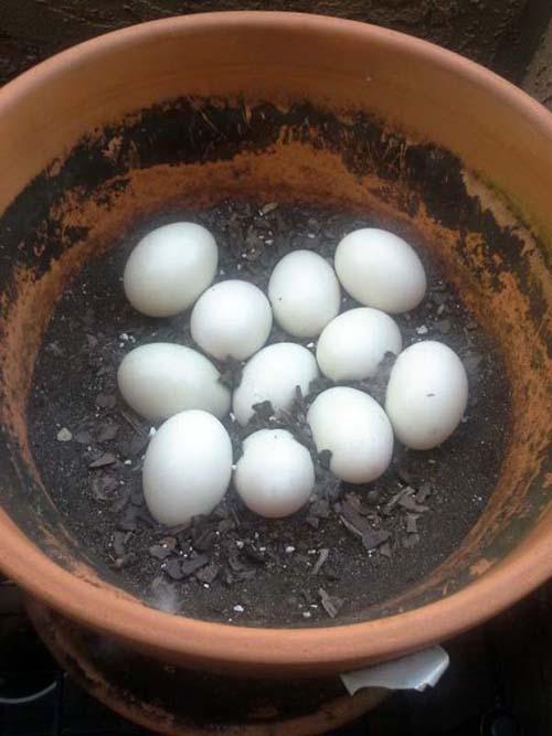 Bird nest photos