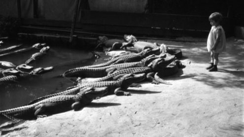 The Los Angeles Alligator Farm in 1920's