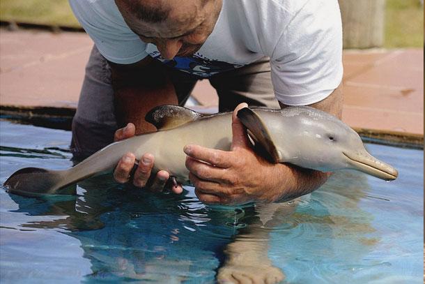 orphan dolphin