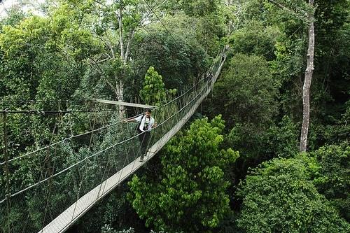 National Park Bridge - Malaysia