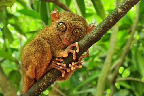 Top 10 Strange and Hideous Creatures