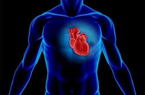 biomaterials Heart