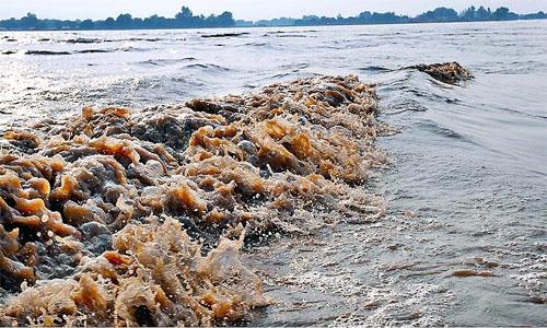 Punjab Flood
