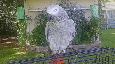 English-Speaking Parrot Returns After Four Years Talking Spanish