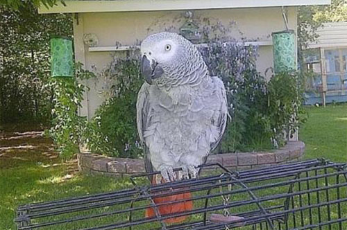 English-Speaking Parrot Returns After Four Years Talking Spanish