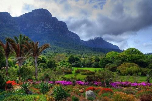 Cape Town Garden