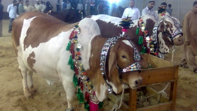 Eid-ul-Azha to be Celebrated On Sep 25