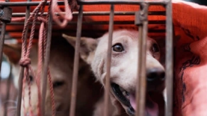 Five Cambodians die after eating infected dog meat