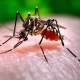 Mosquitoes spread microcephaly disease in Brazil