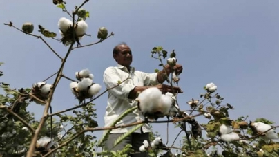 Flood-hit Pakistan helps cut India's cotton glut