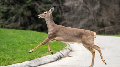 Plane kills deer during landing at California airport