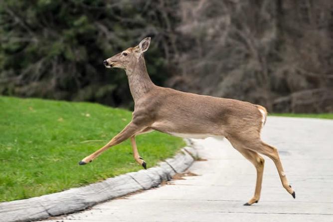 Plane kills deer during landing at California airport