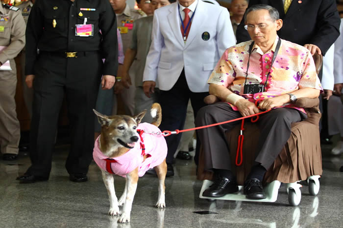 Prison for Insulting King's Dog