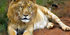 10 Amazing Animals Cross-Breed You Would Like To See