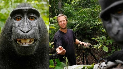 US court rules selfie monkey can't own photo copyright