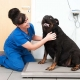 Obese British pets fed cake and alcohol: charity