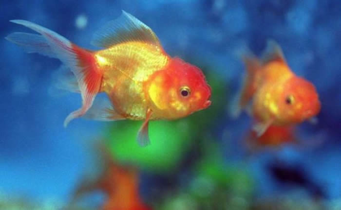Woman made daughter eat 30 goldfish