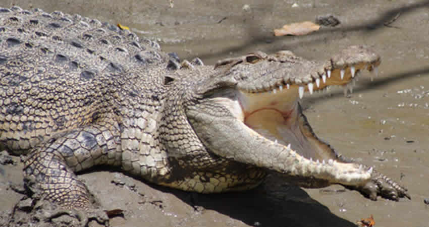 Trap snaps shut on drug dealers who guarded cash with crocs