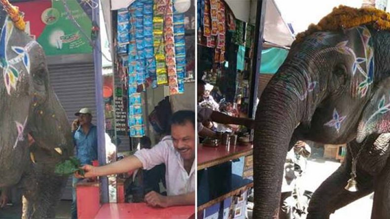 India: Elephant Visits Betel Shop Daily To Eat Special 'Paan'