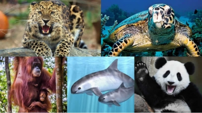 Top 10 Animals That Are At The verge Of Extinction