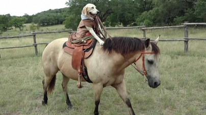WATCH: Dog Rides A Horse In Human-Like Fashion