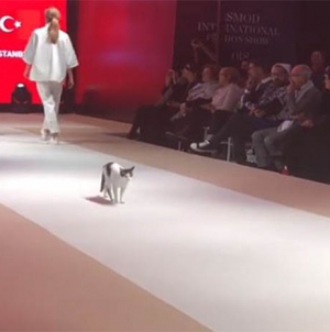 Catwalk for Cats: Feline Steals Fashion Show in Turkey